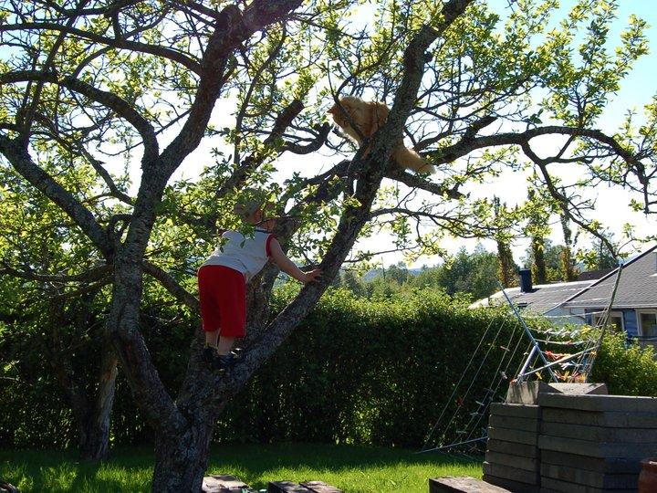 Flygende Jacob med kylling