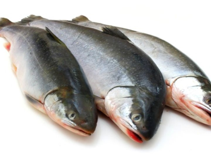 Fiskegryte 5-6 mnd