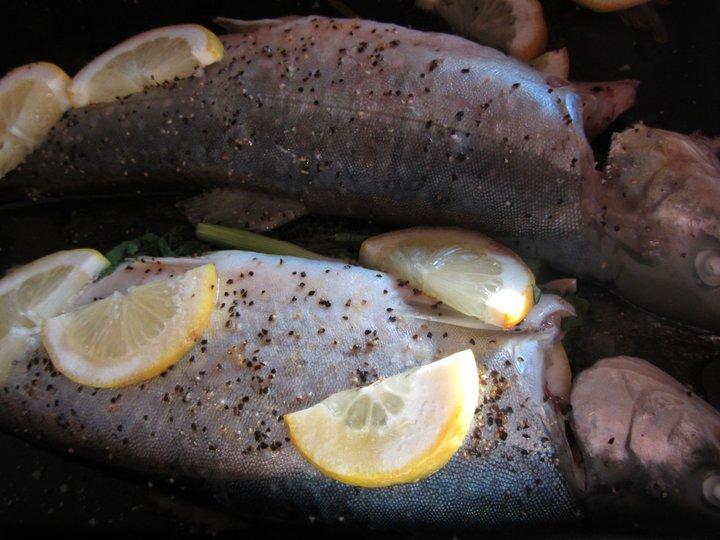 Ovnsbakt fjellørret med lun potetsalat