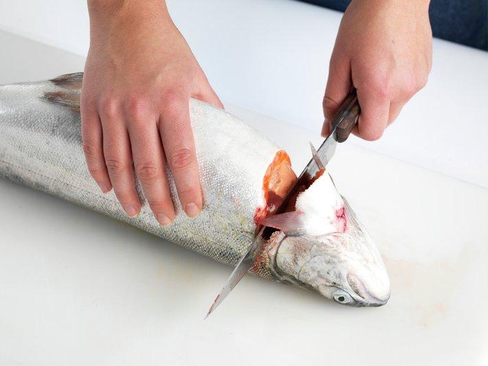 Slik renser og fileterer du fisk 3