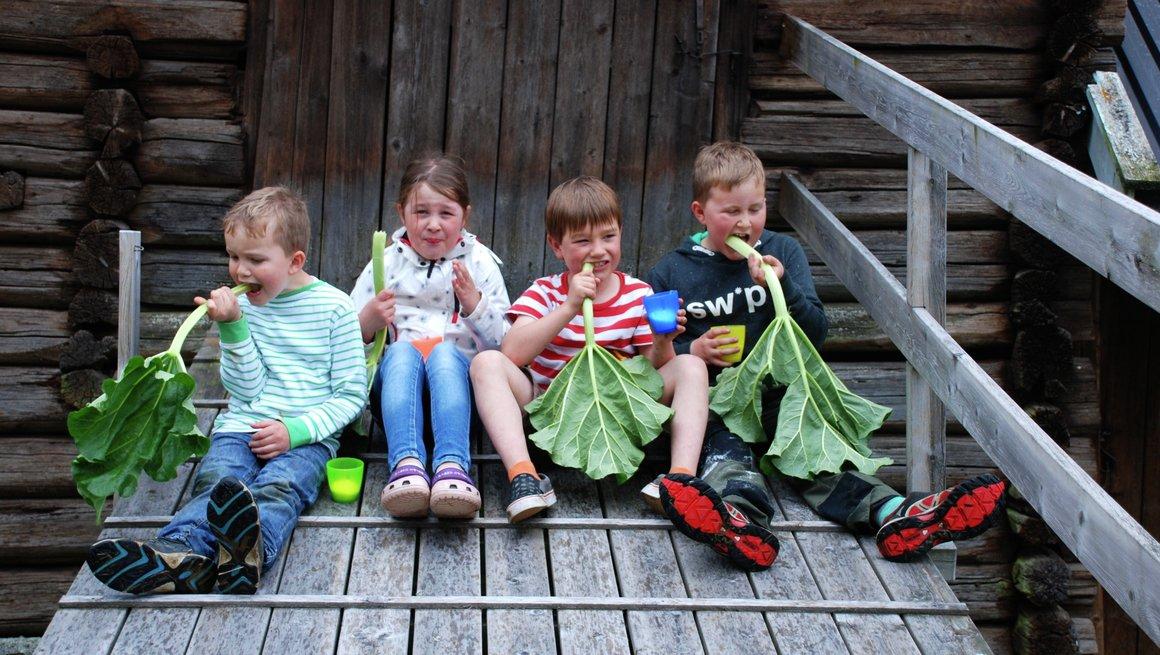 Barn med rabarbra