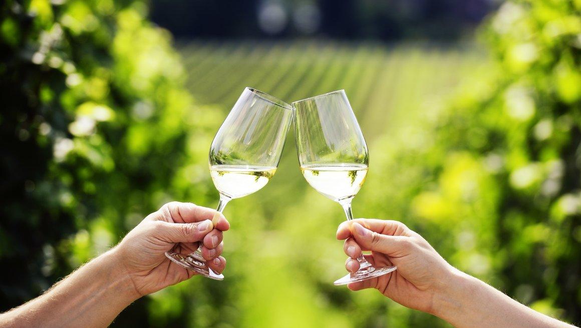 Hvitvin og vinranker