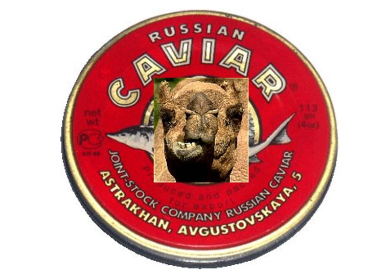 Kamel Kaviar
