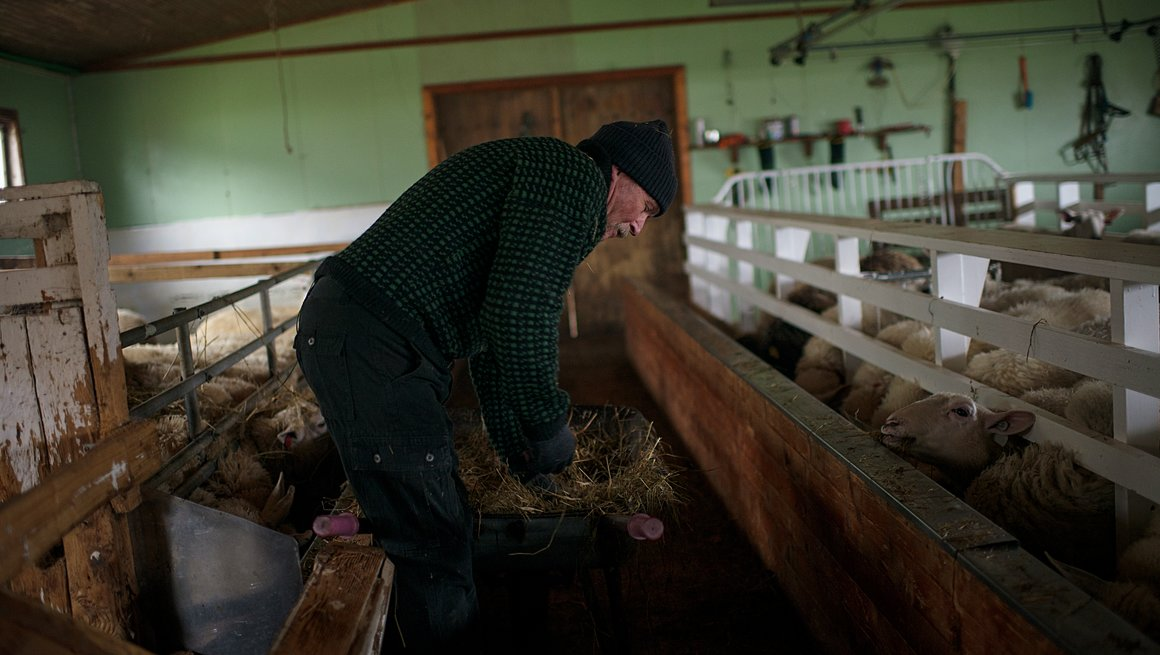 Miljøbilde kampanjeside Norsk lam i verdensklasse
