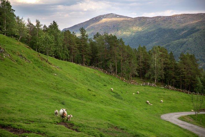 Gård i Eikefjord i Sogn og Fjordane