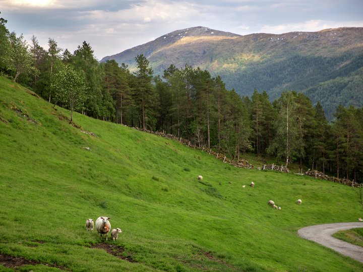 Norsk matproduksjon