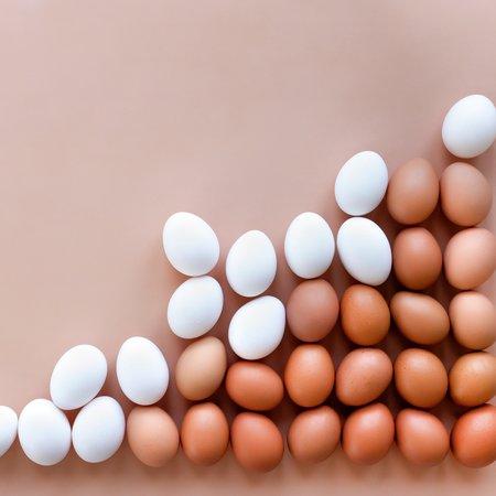 Egg proteiner