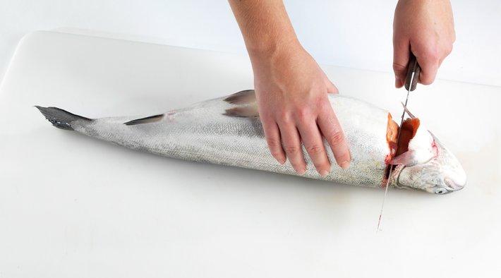 Slik renser og fileterer du fisk 4