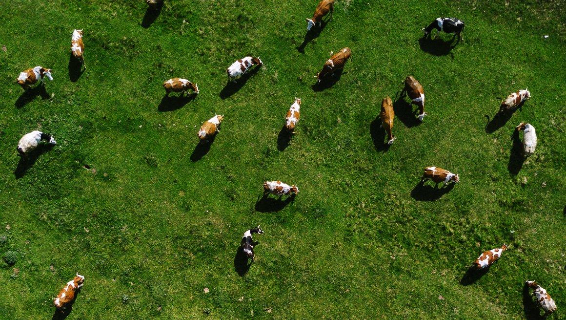 Hvordan påvirker drøvtyggerne vårt biologiske mangfold?