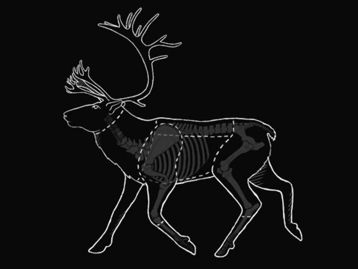 Oppdelingguide reinsdyr