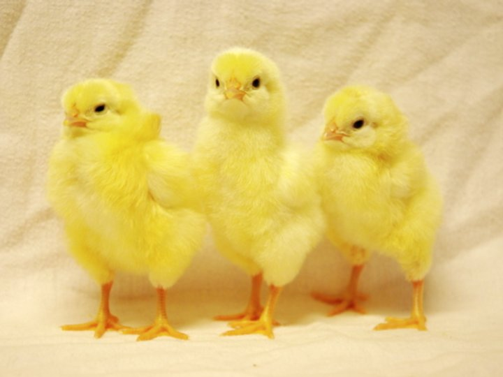 Kyllinggryte 5-6 mnd