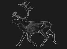 Oppdeling av reinsdyr