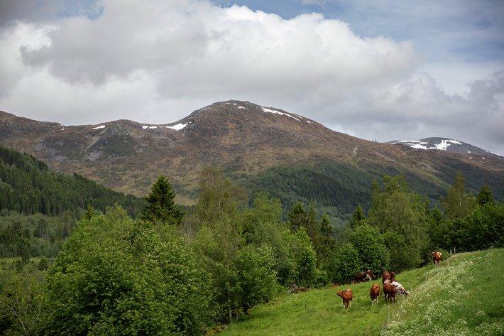 Gård i Nordfjord