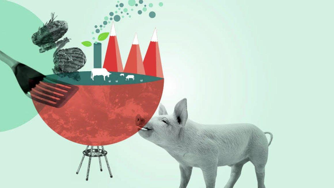 Kjøtt og bærekraft