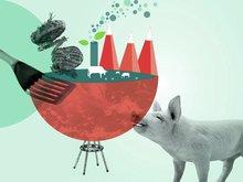 Derfor er norsk kjøtt bærekraftig