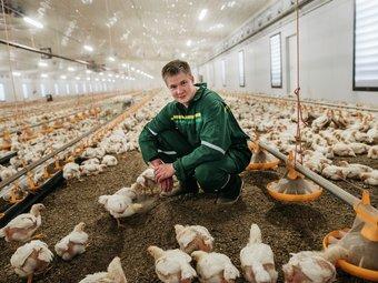 Hva betyr mest for kyllingenes dyrevelferd?