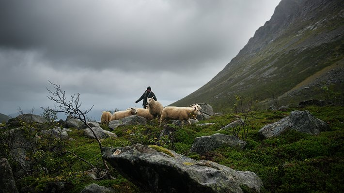 Miljøbilde kampanjeside Norsk lam i verdensklasse 2