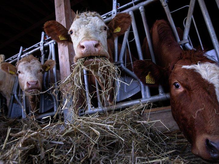 Hva betyr metanutslipp fra kua?