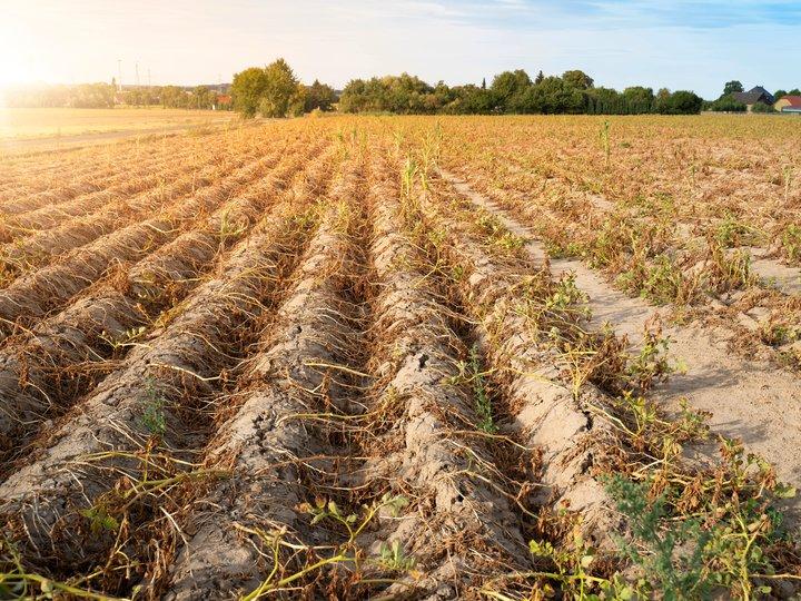 4 grunner til at matsvinn er et miljø- og klimaproblem