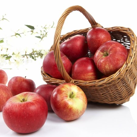 epler, rød gravensten  (Frukt.no)