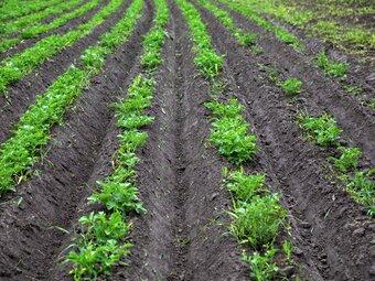 Hva er økologisk landbruk?