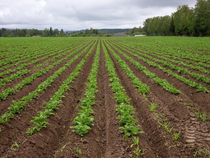 Matsvinn - et miljø- og klimaproblem