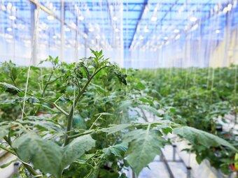 Hva er vertikalt landbruk?