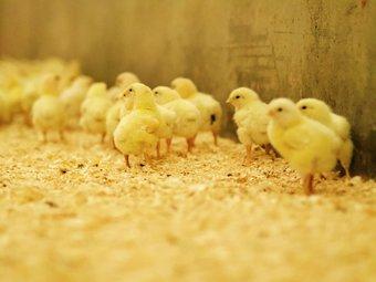 Kan matproduksjon påvirke antibiotikaresistens?