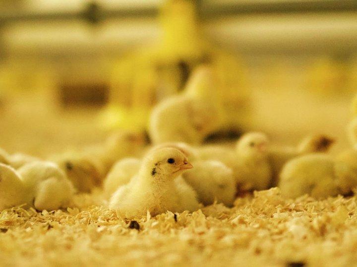 Gjødsel fra dyra fører næring tilbake til jorda