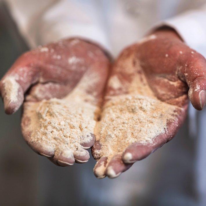 Kornets vei fra bonde til brød. Foto  Krister Sørbø  Brød   Korn